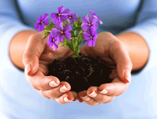 بهار، بهترین زمان برای نوسازی باغچه ها