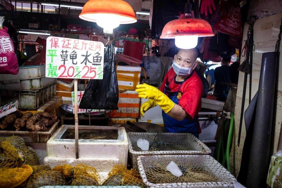 تصاویر ، با وجود کرونا چینی ها هنوز لاکپشت و وزغ می خورند