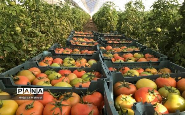 هشدارهای هواشناسی به کشاورزان و دامداران؛ کم بارشی تا پایان اسفند ادامه دارد