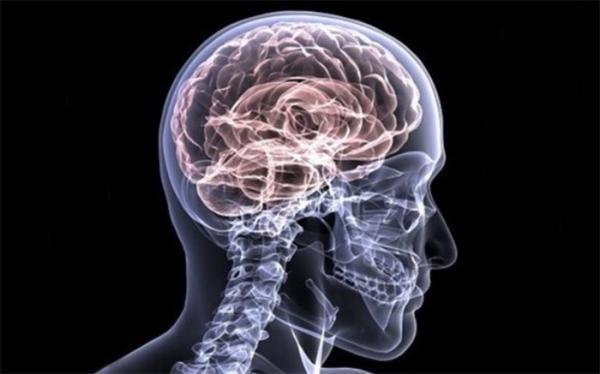 پروتئین ها چگونه اطلاعات را در مغز کنترل می نمایند؟